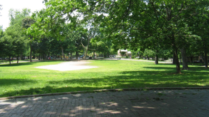 Brower Park Lawn Showing compaction caused balding