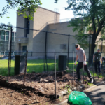 Volunteers from the East New York Farms